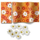 Comfortable Box - Daisies all over